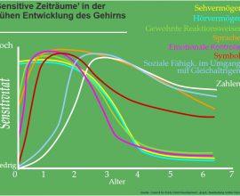 Sensitive-Zeiträume-in-der-frühen-Entwicklung-des-Gehirns.jpg
